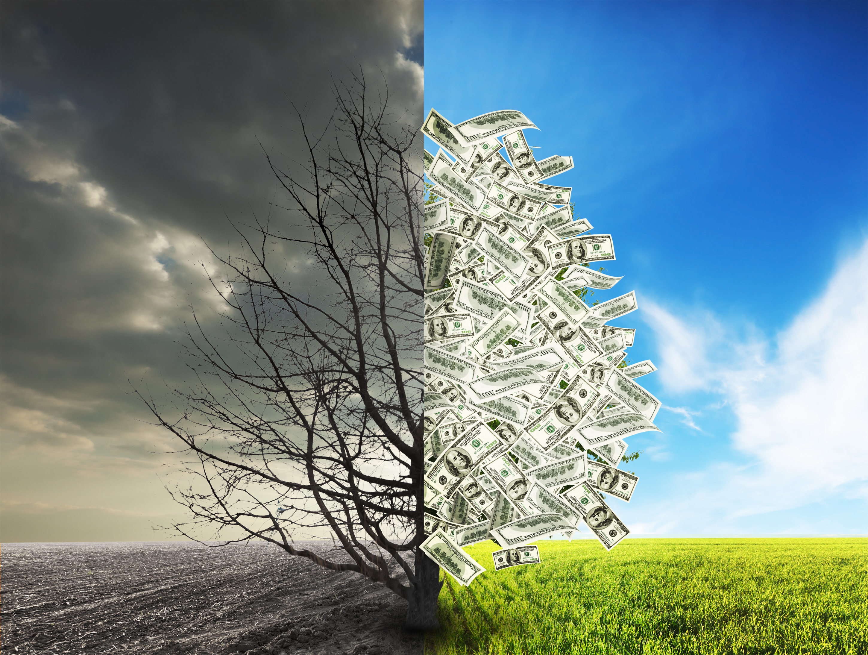 a tree with money as leaves